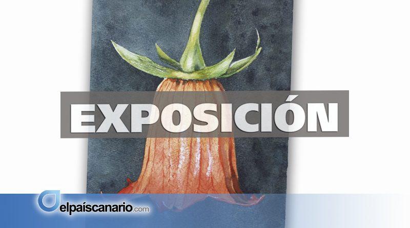 """4 MAYO. Se inaugura la Exposición """"ARUCUARELAS: Flor Canaria"""""""