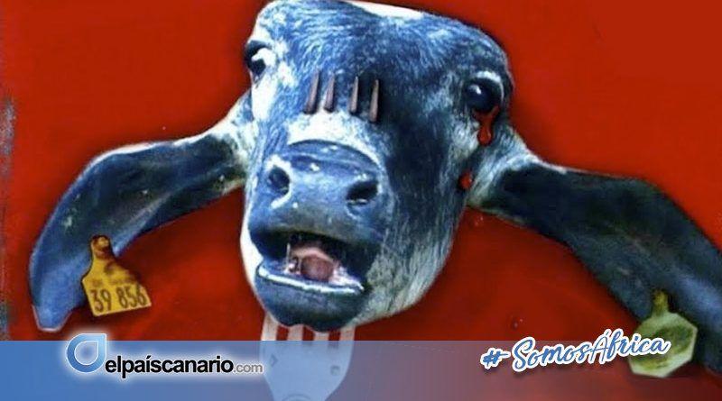 """26 AGOSTO. Proyección de """"La carne es débil"""""""