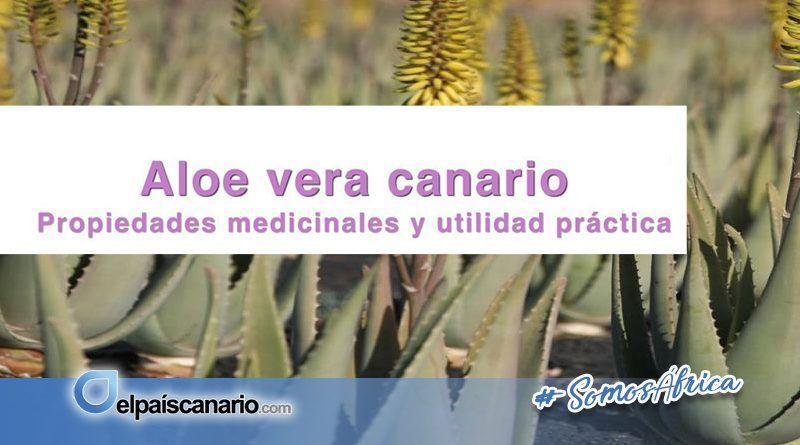 """6 OCTUBRE. comienza el periodo para inscribirse en el Taller: """"ALOE VERA CANARIO. Propiedades medicinales y utilidad práctica"""""""