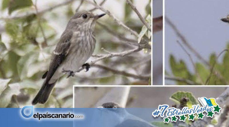 """Se abre el plazo de inscripción para el Curso """"Iniciación al Conocimiento de las Aves Migratorias de Canarias"""""""