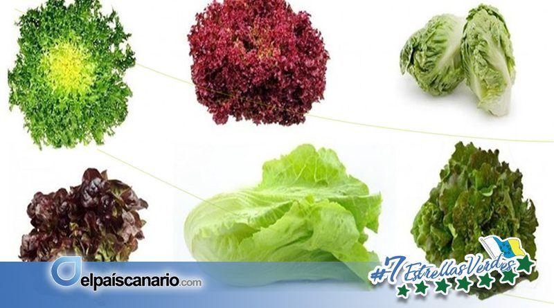 LA VINCA Ecologista en Acción realizará en Firgas un Taller para cultivar de manera sencilla hojas comestibles en las ventanas de los hogares