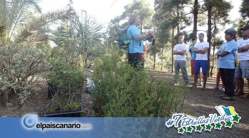 3 DICIEMBRE. Activat y La Vinca EeA convocan una plantación de flora canaria en las laderas del Tiro Pichón (Arucas)