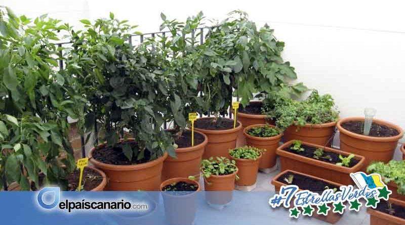 Se prepara una nueva edición del Taller de Huerta en Macetas en LA CASA VERDE (Firgas)