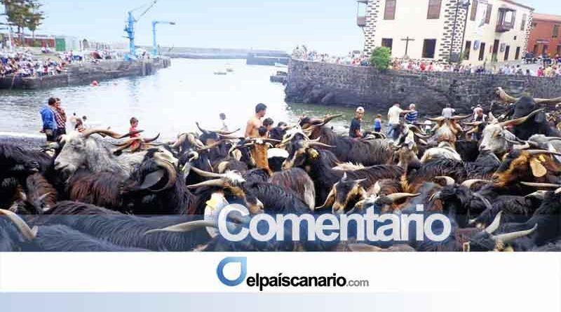 Las redes estallan contra PACMA y su comunicado contra el baño de las cabras del Puerto de la Cruz