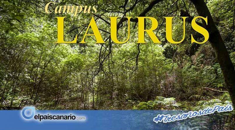 """""""Noviembre Forestal 2018"""" se acerca a Moya con la exposición divulgativa """"Campus LAURUS"""""""