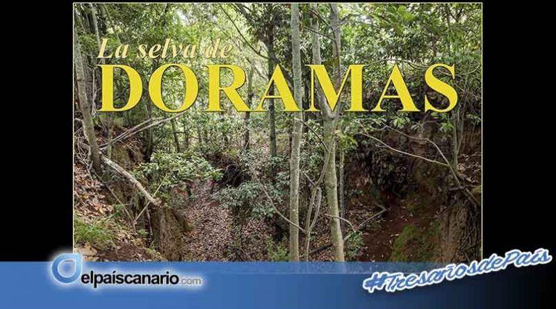 """""""Noviembre Forestal 2018"""" visita la Vega de San Mateo con la Exposición Divulgativa """"LA SELVA DE DORAMAS"""""""