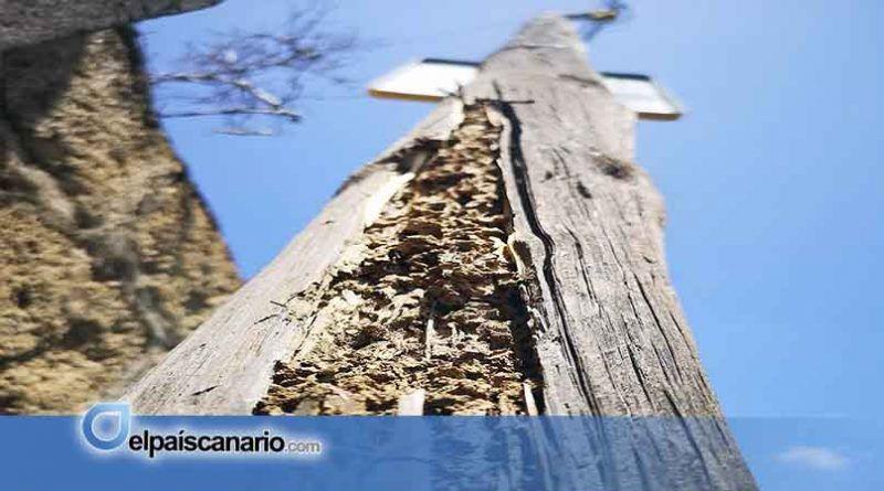 Cabildo de Tenerife y Gobierno de Canarias destinan 270.000 euros para combatir las termitas