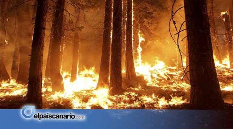 Los incendios forestales se apagan en invierno