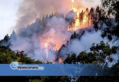 La superficie afectada por el incendio de Gran Canaria supera ya las 1.500 hectáreas y sigue avanzando