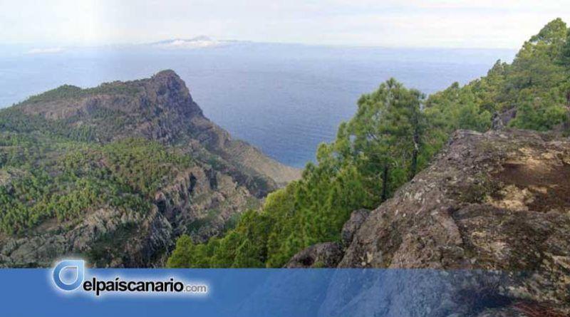 Las juventudes de AHORA CANARIAS hacen público su compromiso en la defensa del pinar de Tamadaba