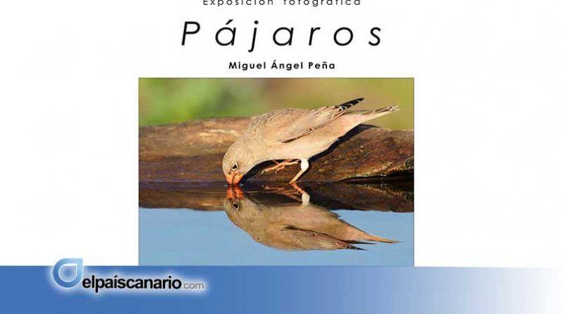 """1 ENERO. Se abre la Exposición """"PÁJAROS"""" de Miguel Ángel Peña en el Salón Parroquial de Valleseco"""