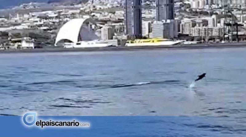 Las aguas residuales descienden un 49% en Tenerife tras el cese de la actividad económica