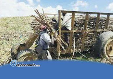 República Dominicana: Récords de producción, ganancias gigantescas y salarios miserables en la Industria Azucarera