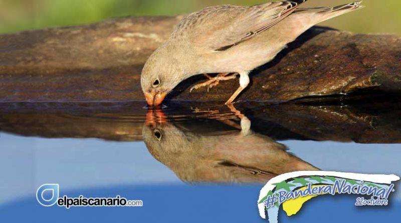 """Noviembre Forestal 2020 visita Telde con la Exposición Divulgativa """"PAJAROS"""""""