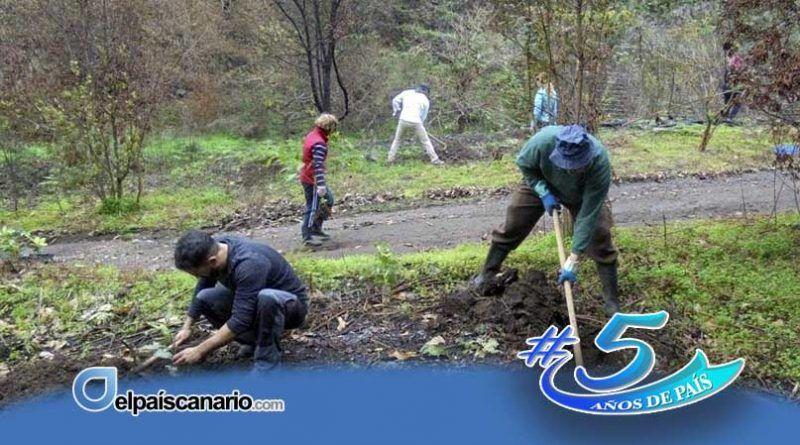 Gran Canaria: Valleseco acoge el martes 8 de diciembre una repoblación forestal en los Llanos de Constantino