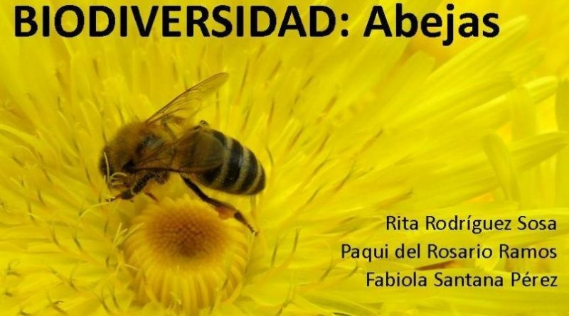 """1 JUNIO. Abre en Arucas la Exposición """"Biodiversidad: Abejas"""", de Rita Rodríguez, Paqui del Rosario y Fabiola Santana"""