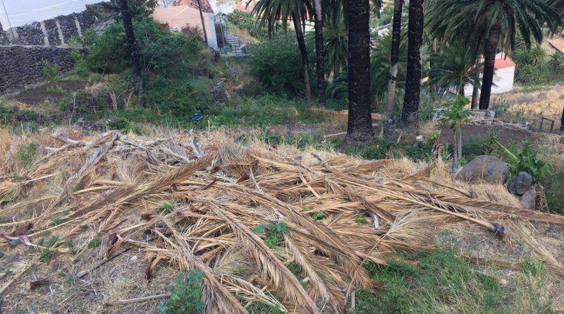 Iniciativa por La Gomera alerta del estado que muestran muchos espacios de la isla para la expansión de incendios forestales