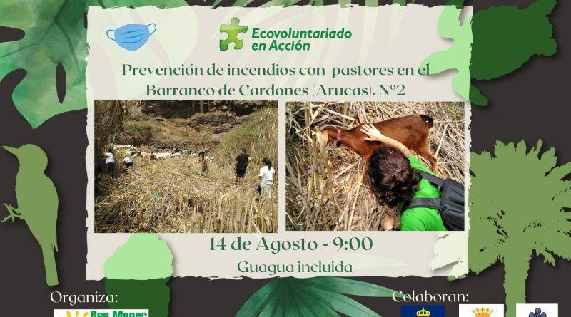 14 AGOSTO. Ecovoluntariado en Acción vuelve al barranco de Cardones